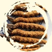 连州上门回收虫草-冬虫夏草回收今日价格
