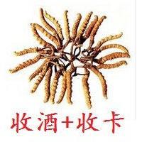 邯郸回收冬虫夏草门市 丛台区哪里回收冬虫夏草价格高